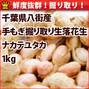 「平成29年度産 手もぎ掘り取り生落花生」 鮮度抜群のナカテユタカが特価販売中