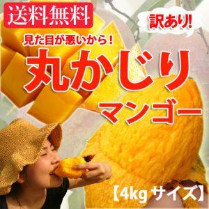 「沖縄産訳ありマンゴー」 沖縄産マンゴーのお徳用セットが特価販売中